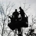 prace w koronach drzew